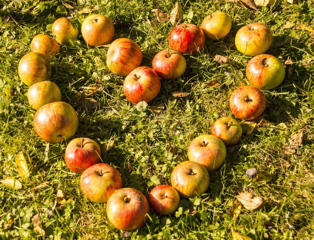 Mindful eating- apples in heart shape
